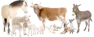 SS3 Animal Husbandry - Lessons notes, tests, exam questions