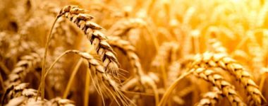 Agricultural Science JSS1 Upper Basic 7