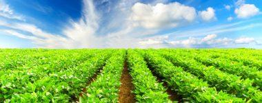 Agricultural Science JSS2 Upper Basic 8