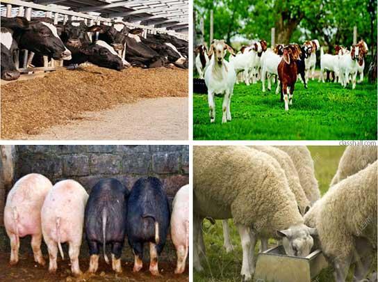 Animal Nutrition - Animal Feeds