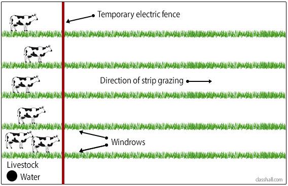 Types of Grazing - Strip Grazing